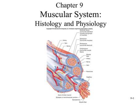 9-1 Muscular System: Histology and Physiology Chapter 9.