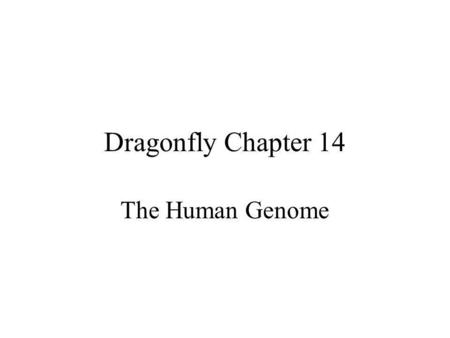 Dragonfly Chapter 14 The Human Genome. Section 14-1: Human Heredity Key Concepts: How is sex determined? How do small changes in DNA Cause genetic disorders?