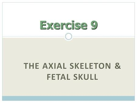 """THE AXIAL SKELETON & FETAL SKULL Exercise 9. Two Skeletal Divisions Axial skeleton Axial skeleton  Bones around the body's """"axis"""" or center of gravity."""