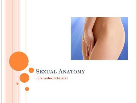 S EXUAL A NATOMY o Female-External. V ULVA External portion of the female reproductive system. Includes: Mons Veneris, Labia, Vestibule, Urethral Opening,
