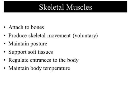 Skeletal Muscles Attach to bones Produce skeletal movement (voluntary) Maintain posture Support soft tissues Regulate entrances to the body Maintain body.
