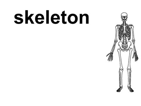 Skeleton. the hard structure (bones and cartilages) that provides a frame for the body of an animal.