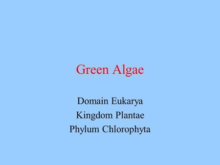 Domain Eukarya Kingdom Plantae Phylum Chlorophyta Green Algae.
