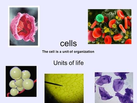 Cells The cell is a unit of organization Units of life.