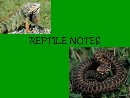 REPTILE NOTES.