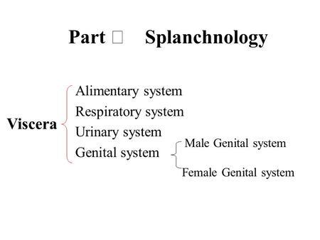 Part Splanchnology Alimentary system Respiratory system Urinary system Genital system Viscera Male Genital system Female Genital system.