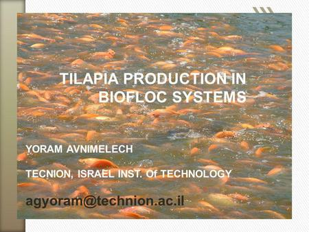 TILAPIA PRODUCTION IN BIOFLOC SYSTEMS YORAM AVNIMELECH TECNION, ISRAEL INST. Of TECHNOLOGY agyoram@technion.ac.il.