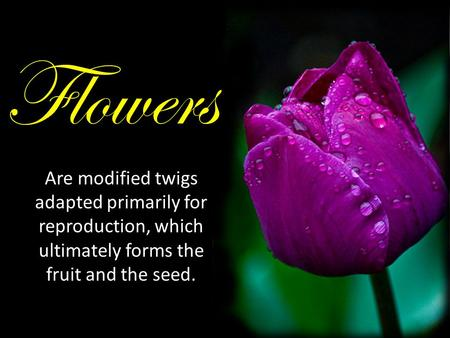 Are modified twigs adapted primarily for reproduction, which ultimately forms the fruit and the seed. Flowers.
