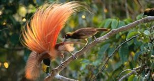 C:\Users\strachanm\Pictures\bird of paradise.png
